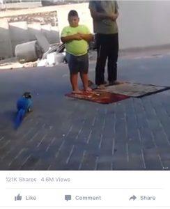 Parrot child prayer